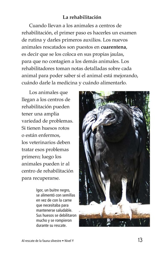 Book Preview For Wildlife Rescue Page 13