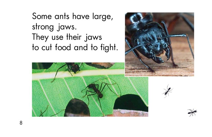 Book Preview For Ants, Ants, and More Ants Page 8
