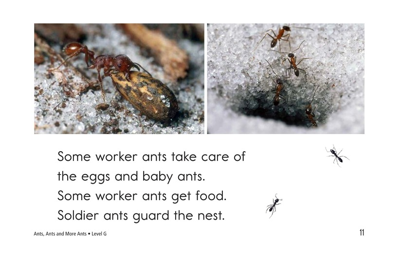 Book Preview For Ants, Ants, and More Ants Page 11