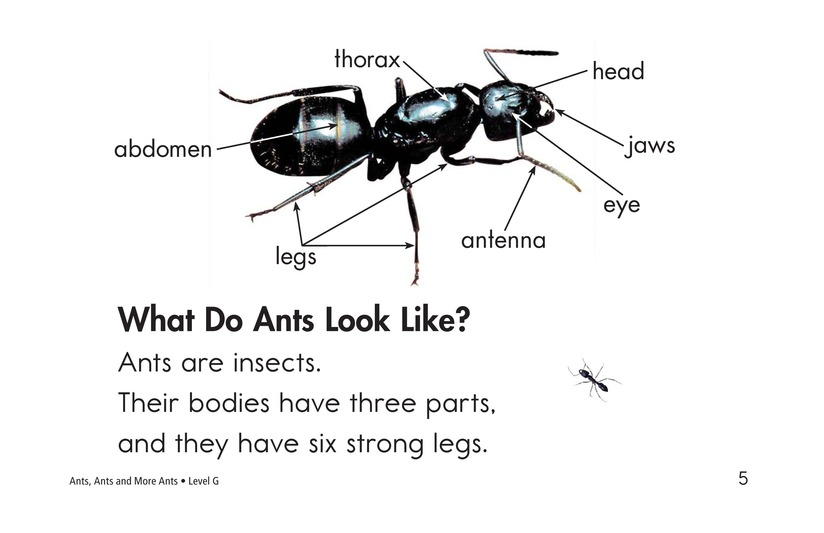 Book Preview For Ants, Ants, and More Ants Page 5