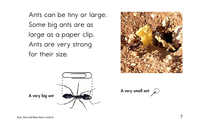 Book Preview For Ants, Ants, and More Ants Page 7