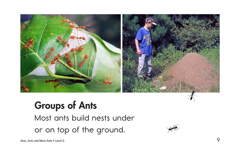 Book Preview For Ants, Ants, and More Ants Page 9