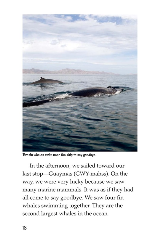 Book Preview For Charlene's Sea of Cortez Journal Page 18