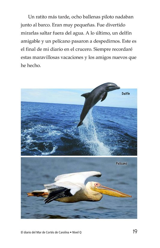 Book Preview For Charlene's Sea of Cortez Journal Page 19