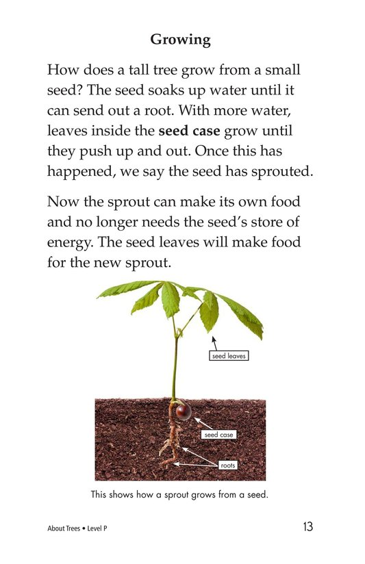 Book Preview For About Trees Page 13