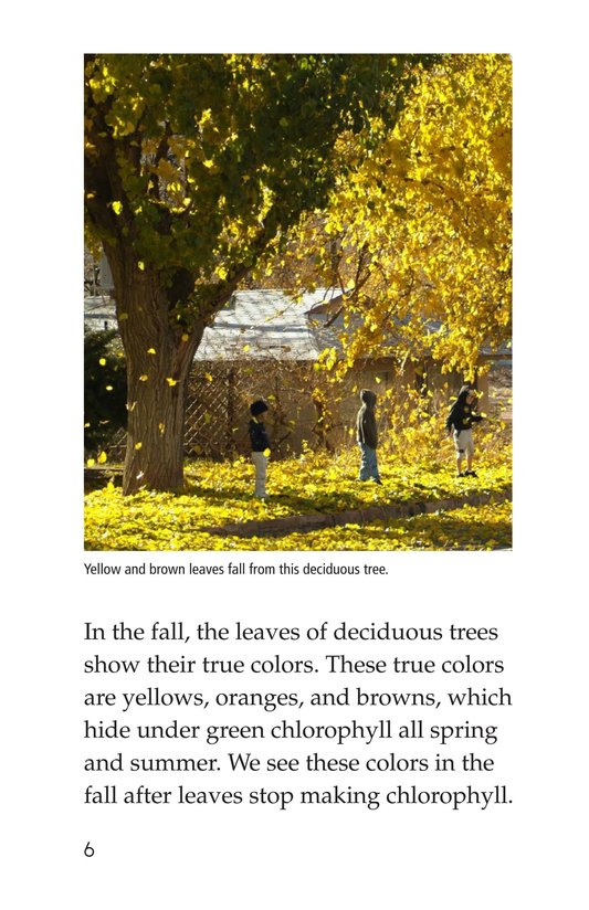 Book Preview For About Trees Page 6