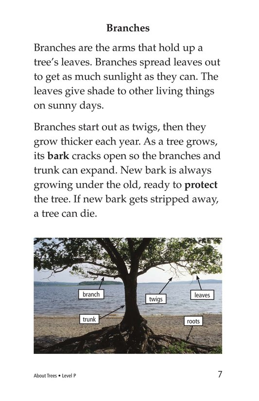 Book Preview For About Trees Page 7