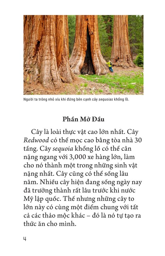 Book Preview For About Trees Page 4